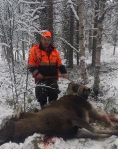Tässä Veli-Juhani Selkälän vuonna 2014 ottamassa kaatokuvassa Jussi, Manta ja hirvi, joka oli katkaissut takajalkansa ja jonka Matti Tolvanen ampui Mantan haukkuun.